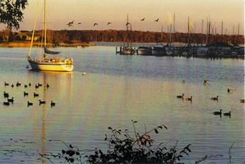 Sunset with Waterfowl on the Waterfront