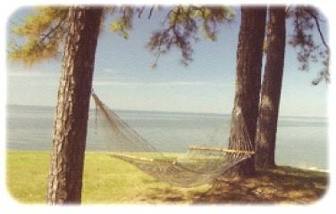 Hammock overlooking the Bay